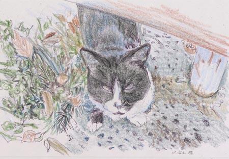 比治山の猫2.jpg