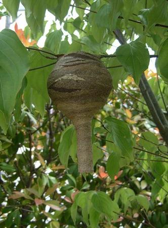 120603スズメバチの巣.jpg