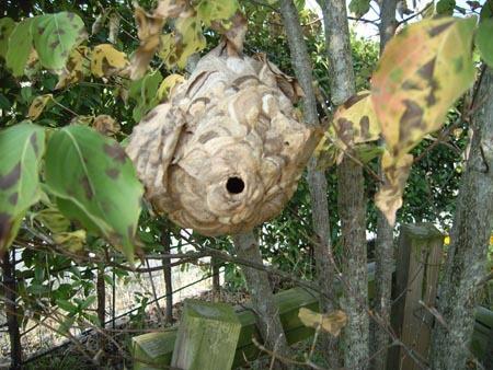 ハチの巣1.jpg